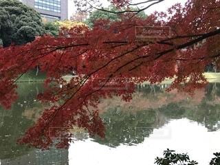 紅葉風景の写真・画像素材[1653197]