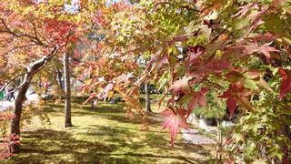 フォレスト内のツリーの写真・画像素材[1654849]