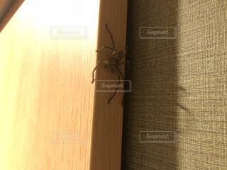 ドアの陰にアシダカグモの写真・画像素材[2363872]