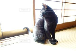 ひなたぼっこする黒猫の写真・画像素材[1665509]