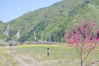 春の写真・画像素材[1654311]