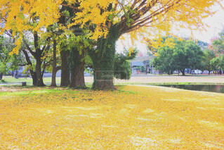 学びの森の写真・画像素材[1664930]
