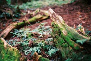 岩のクローズアップの写真・画像素材[4345536]