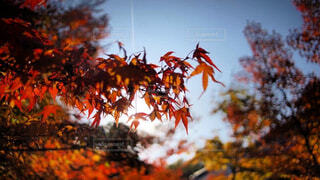 近くの木のアップの写真・画像素材[1654075]