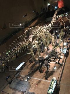 博物館の恐竜たちの写真・画像素材[1655430]