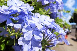 通り沿いに咲く花の写真・画像素材[1660236]