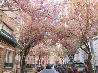 桜の写真・画像素材[2148080]