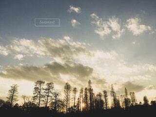 日没前の井の頭公園の写真・画像素材[1655124]