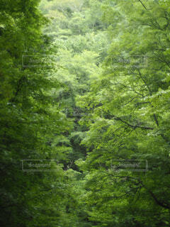 森の中の写真・画像素材[1655878]