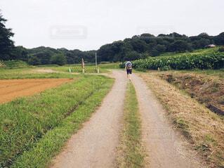 散歩の写真・画像素材[1663300]