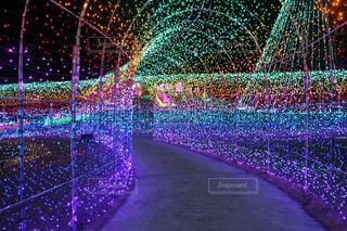 東京ドイツ村 光のトンネルの写真・画像素材[1656190]