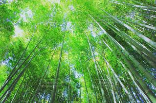 竹林の道の写真・画像素材[2133262]