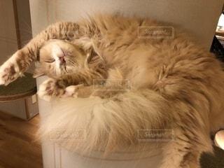 猫さんのお昼寝の写真・画像素材[2313557]