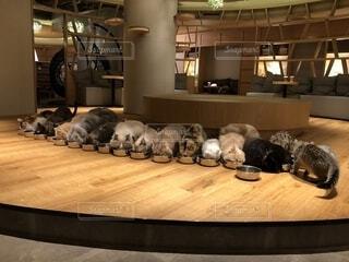 木製のテーブルの上に横たわる猫の写真・画像素材[2313560]