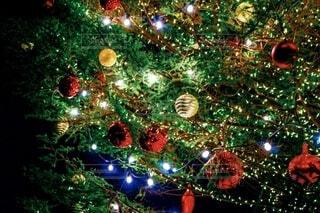 赤レンガ倉庫のクリスマスツリーの写真・画像素材[2761031]