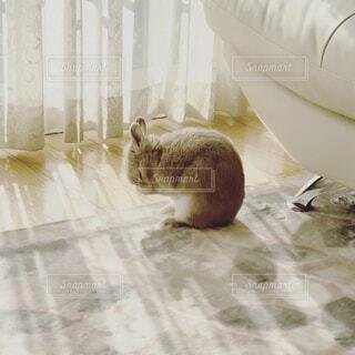 うさぎのミミちゃんの写真・画像素材[1655072]