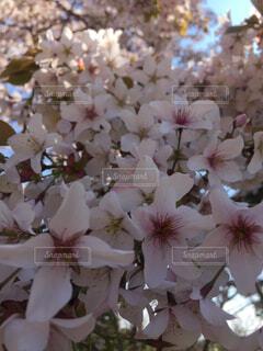 近くの花のアップ💐の写真・画像素材[1658142]