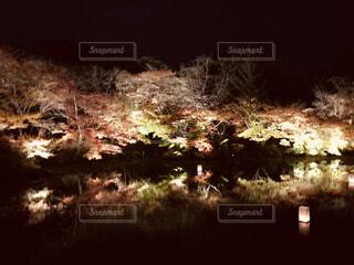 夜の紅葉の写真・画像素材[1656141]
