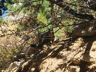 森で出会った小動物の写真・画像素材[1668806]