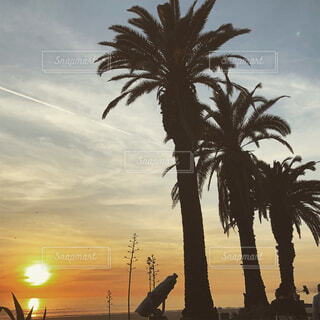 ロサンゼルス、サンタモニカのベニビーチにて。の写真・画像素材[1656300]