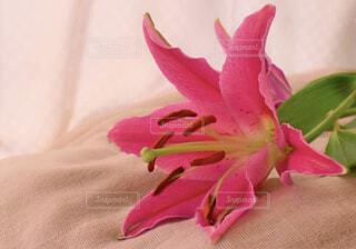 近くの花のアップの写真・画像素材[1656866]