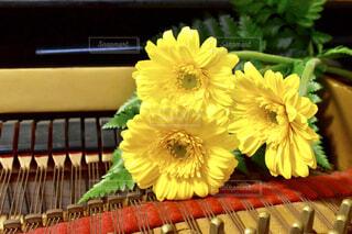 ピアノとガーベラの写真・画像素材[1748323]
