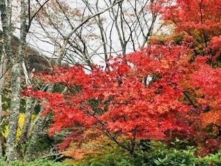 紅葉の写真・画像素材[2735007]