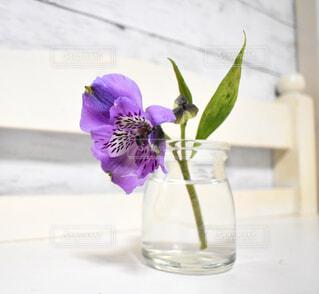 紫が綺麗なアルストロメリアの写真・画像素材[3116540]