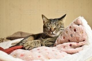 可愛いトラ猫の写真・画像素材[3989838]