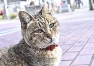 可愛いトラ猫の写真・画像素材[4175007]