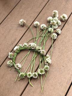 白詰草の花輪の写真・画像素材[4441327]