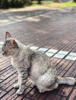 可愛い野良猫の写真・画像素材[4599915]