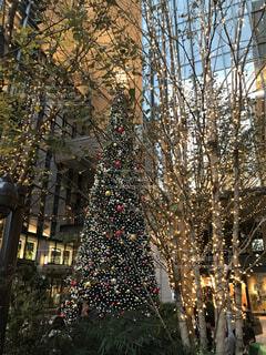クリスマスツリーの写真・画像素材[2793659]