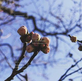 湯島天満宮、梅まつり🌸の写真・画像素材[2936536]