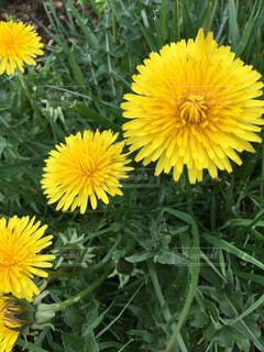 花の写真・画像素材[2058645]