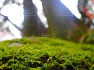 緑の草の上の写真・画像素材[1659973]