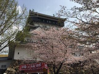 春の小倉城の写真・画像素材[1662055]