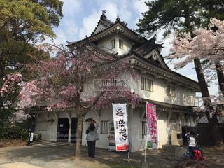 小倉城の桜の写真・画像素材[1662130]