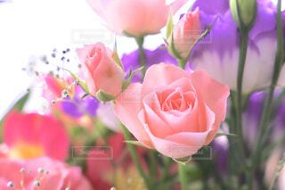 バラの花の写真・画像素材[1661486]