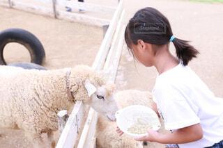 羊をかわいがる人の写真・画像素材[1661548]