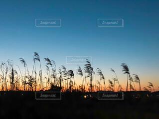 街に沈む夕日の写真・画像素材[1830673]