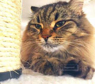 猫の写真・画像素材[60994]