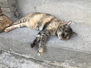 歩道の上に横たわる猫の写真・画像素材[1662466]