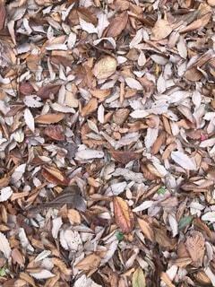 落ち葉の絨毯の写真・画像素材[1664012]