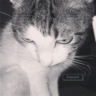 猫 - No.612405