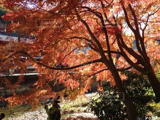 秋の高尾山口の写真・画像素材[1664242]