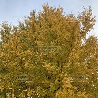フォレスト内のツリーの写真・画像素材[1665515]
