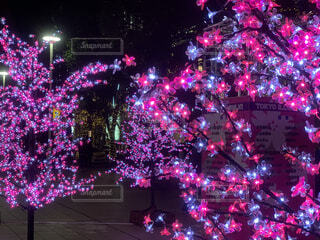 桜のイルミネーションの写真・画像素材[1665789]