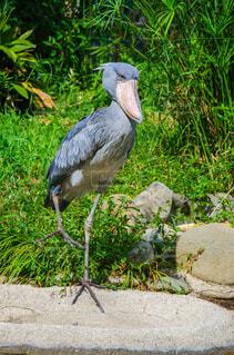 草の中に立っている鳥の写真・画像素材[1665724]