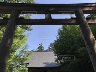 神社と鳥居の写真・画像素材[1668054]